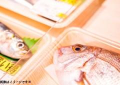 魚 (4)
