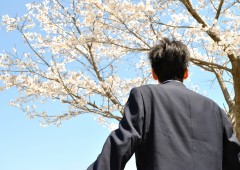 桜 後ろ姿